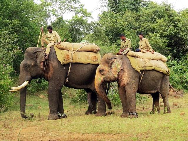 जंगली हाथियों को नियंत्रित