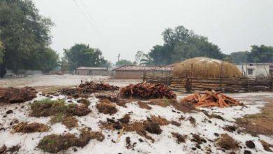 सरगुजा के दर्जनों गांवों में ओलों ने मचाई भारी तबाही