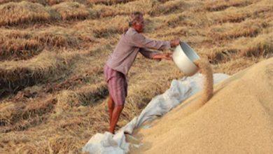 बेमेतरा में धान खरीदी को लेकर भड़का किसानों का गुस्सा...पढ़िए पूरा मामला
