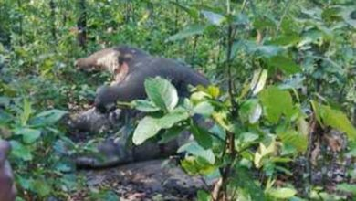 हाथियों की मौत