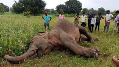 हाथी की मौत