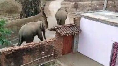 हाथियों का दहशत