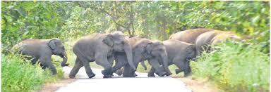 हाथियों का उत्पात